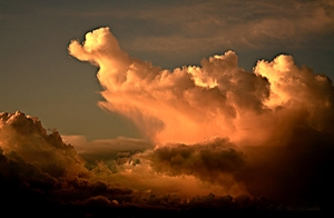 Storm Duck, Essex U.K, (c) Bev Hadland