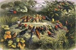 """The Fairy Rehearsal"" aka ""Teaching Birds to Sing"", by Richard Doyle, public domain"