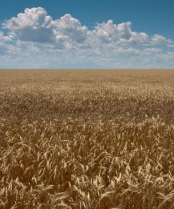 Comanche National Grasslands, USA
