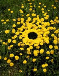 Land Art by Andy Goldsworthy