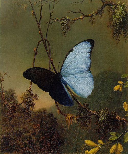 501px-martin_johnson_heade_-blue_morpho_butterfly_atc