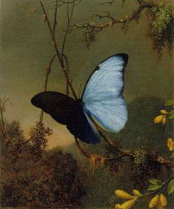 501px-martin_johnson_heade_-blue_morpho_butterfly_atc